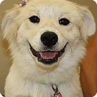 Adopt A Pet :: Shelby  *Adopted - Oklahoma City, OK