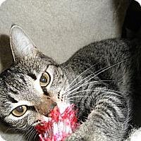 Adopt A Pet :: Gia - Milwaukee, WI