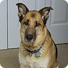 Adopt A Pet :: Boo 1310