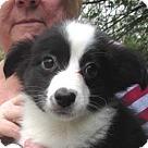 Adopt A Pet :: Runner