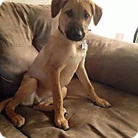 Adopt A Pet :: Janna - Gainesville, FL