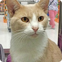 Adopt A Pet :: Jaden - Philadelphia, PA