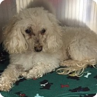 Adopt A Pet :: Bordentown NJ - Bo - New Jersey, NJ