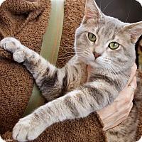 Adopt A Pet :: Malcolm - St Louis, MO