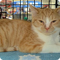 Adopt A Pet :: Josh - Fort Wayne, IN