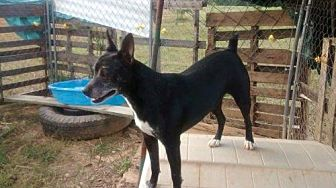 Terrier (Unknown Type, Medium) Mix Dog for adoption in Decatur, Alabama - Oreo