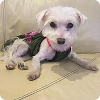 Adopt A Pet :: Betty - Long Beach, NY