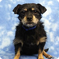Adopt A Pet :: SKIPPY - Westminster, CO
