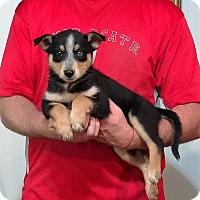 Adopt A Pet :: Marshall - South Euclid, OH