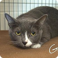 Adopt A Pet :: Gracie - Middleburg, FL