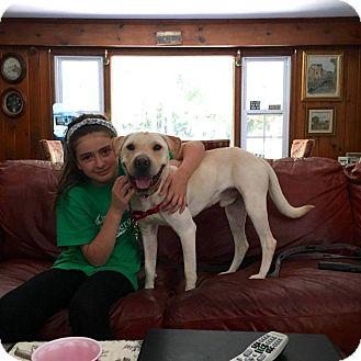 Labrador Retriever/Shar Pei Mix Puppy for adoption in Wantagh, New York - Dodger