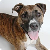 Adopt A Pet :: Bruno - Redding, CA