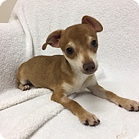 Adopt A Pet :: Urgle - Mission Viejo, CA