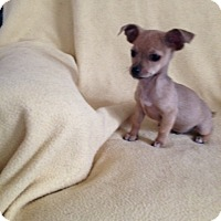Adopt A Pet :: Sammy - Shannon, GA