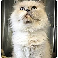 Adopt A Pet :: Bailey - Los Alamitos, CA