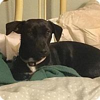 Adopt A Pet :: Liddi - Coldwater, MI