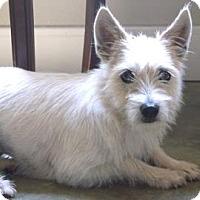 Adopt A Pet :: Suzie - Fredericksburg, TX