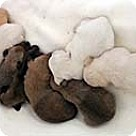 Adopt A Pet :: Donna's Pups