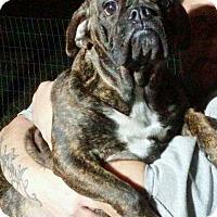 Adopt A Pet :: Paige - Fincastle, VA