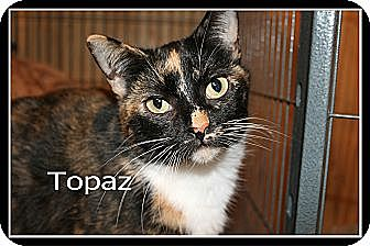 Calico Cat for adoption in Wichita Falls, Texas - Topaz