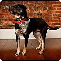 Adopt A Pet :: Hog - Owensboro, KY