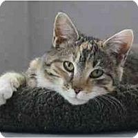 Adopt A Pet :: Madeleine - Davis, CA