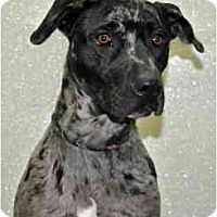 Adopt A Pet :: Roxy - Port Washington, NY