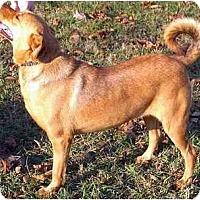 Adopt A Pet :: Maggie - Wakefield, RI