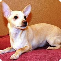 Adopt A Pet :: Naola - Gilbert, AZ