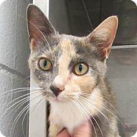 Adopt A Pet :: Opal - Athens, GA
