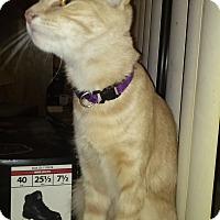 Adopt A Pet :: Skippy - Phoenix, AZ