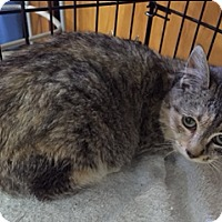 Adopt A Pet :: Rosie - Forest Hills, NY
