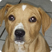 Adopt A Pet :: Hannah AD 03-05-16 - Preston, CT