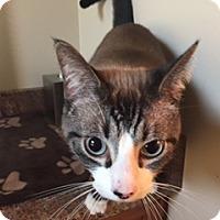 Adopt A Pet :: Joe - Cincinnati, OH
