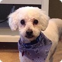Adopt A Pet :: Prince! - New York, NY