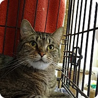 Adopt A Pet :: Makenzie - St. Charles, MO