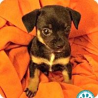 Adopt A Pet :: Paco - Kimberton, PA