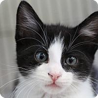Adopt A Pet :: Visa - Sarasota, FL