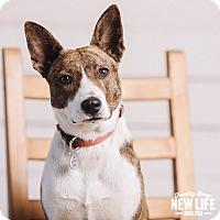 Adopt A Pet :: Strawberry - Portland, OR