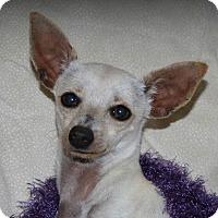 Adopt A Pet :: Cami - Lodi, CA
