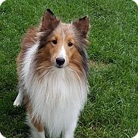 Adopt A Pet :: Devon - Stony Brook, NY