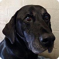 Adopt A Pet :: Hercules - Buckeystown, MD