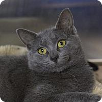 Adopt A Pet :: Eleven - Salem, MA