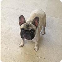 Adopt A Pet :: Gappy - Santa Rosa, CA