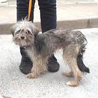 Adopt A Pet :: Suzi - Houston, TX