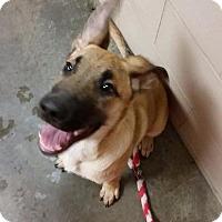 Adopt A Pet :: BLUE - Wintersville, OH