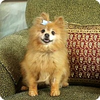 Adopt A Pet :: Angel - Dallas, TX