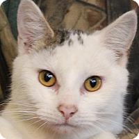 Adopt A Pet :: Mollie - Colonial Heights, VA