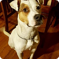 Adopt A Pet :: Remy - Lima, PA