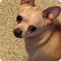 Adopt A Pet :: Pedro - Staunton, VA
